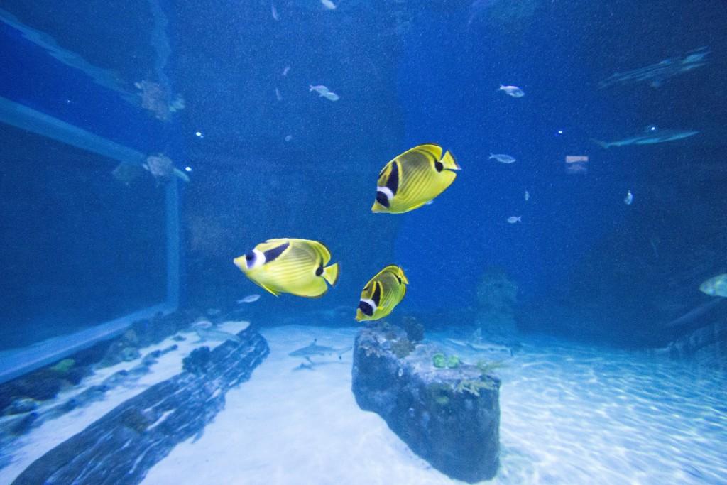 Bright Yellow Fishies!!! (insert heart eyes)